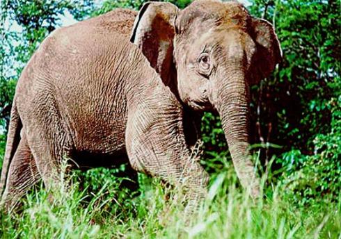 guide_elephant.jpg
