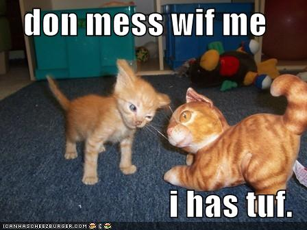 funny-pictures-kitten-is-tough-and-should-not-be-messed-with