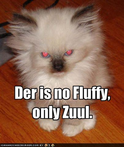 funny-pictures-there-is-no-fluffy