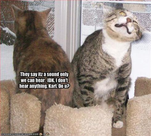 funny-pictures-one-cat-hears-bad-sounds